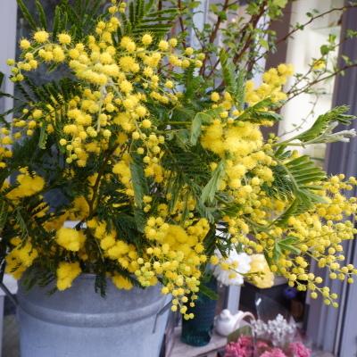 オークリーフ(今日のお店の花。明日の営業につきまして。)_f0049672_18235603.jpg