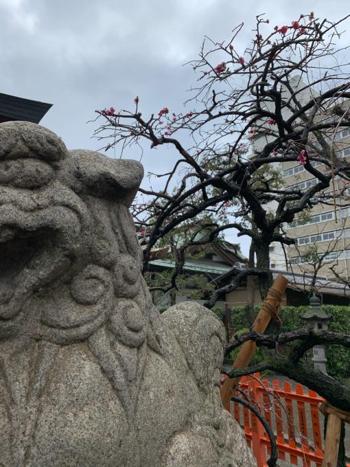 昔の京都が戻ってきてる…_f0152875_09282821.jpg
