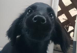 犬は大らかに育てよう!⑤の4)_b0084194_18342526.jpg