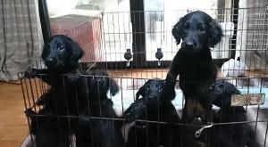犬は大らかに育てよう!⑤の4)_b0084194_18343877.jpg