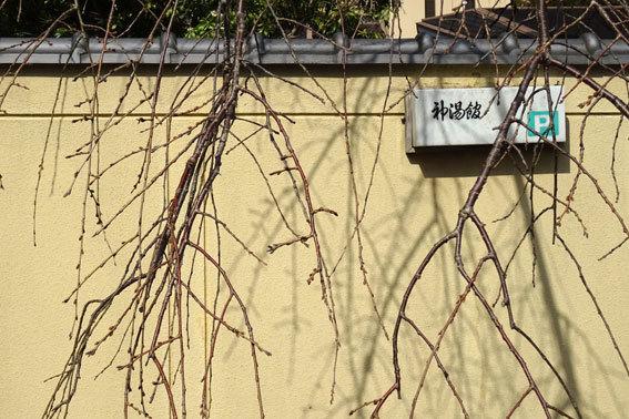 春が来るのに新型コロナ_b0145296_15042912.jpg