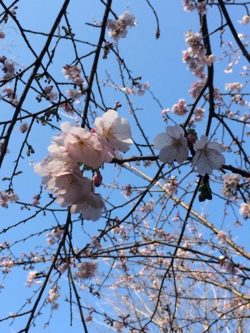 こごみ堂  3月のお知らせ_e0192203_13565717.jpeg