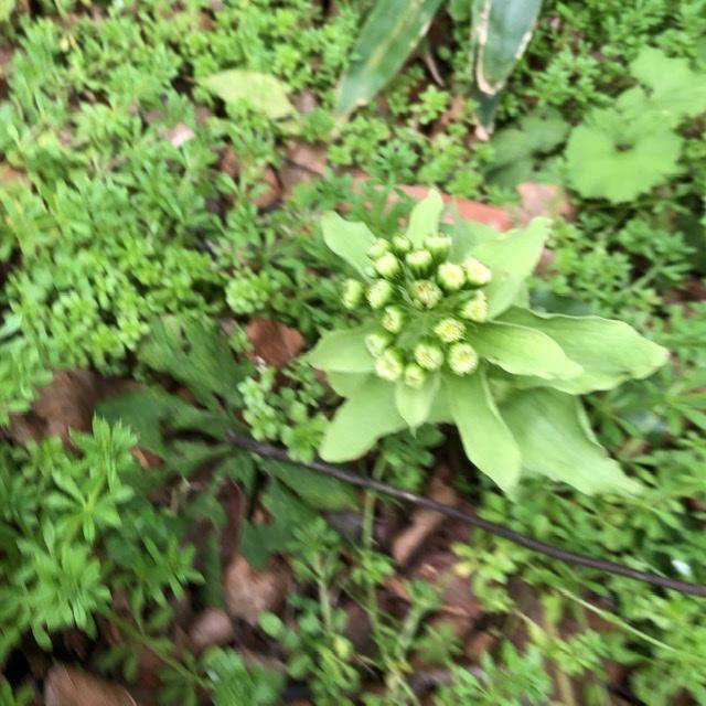 少しずつ 春が_e0245805_16501866.jpeg