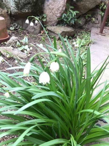少しずつ 春が_e0245805_17033924.jpeg