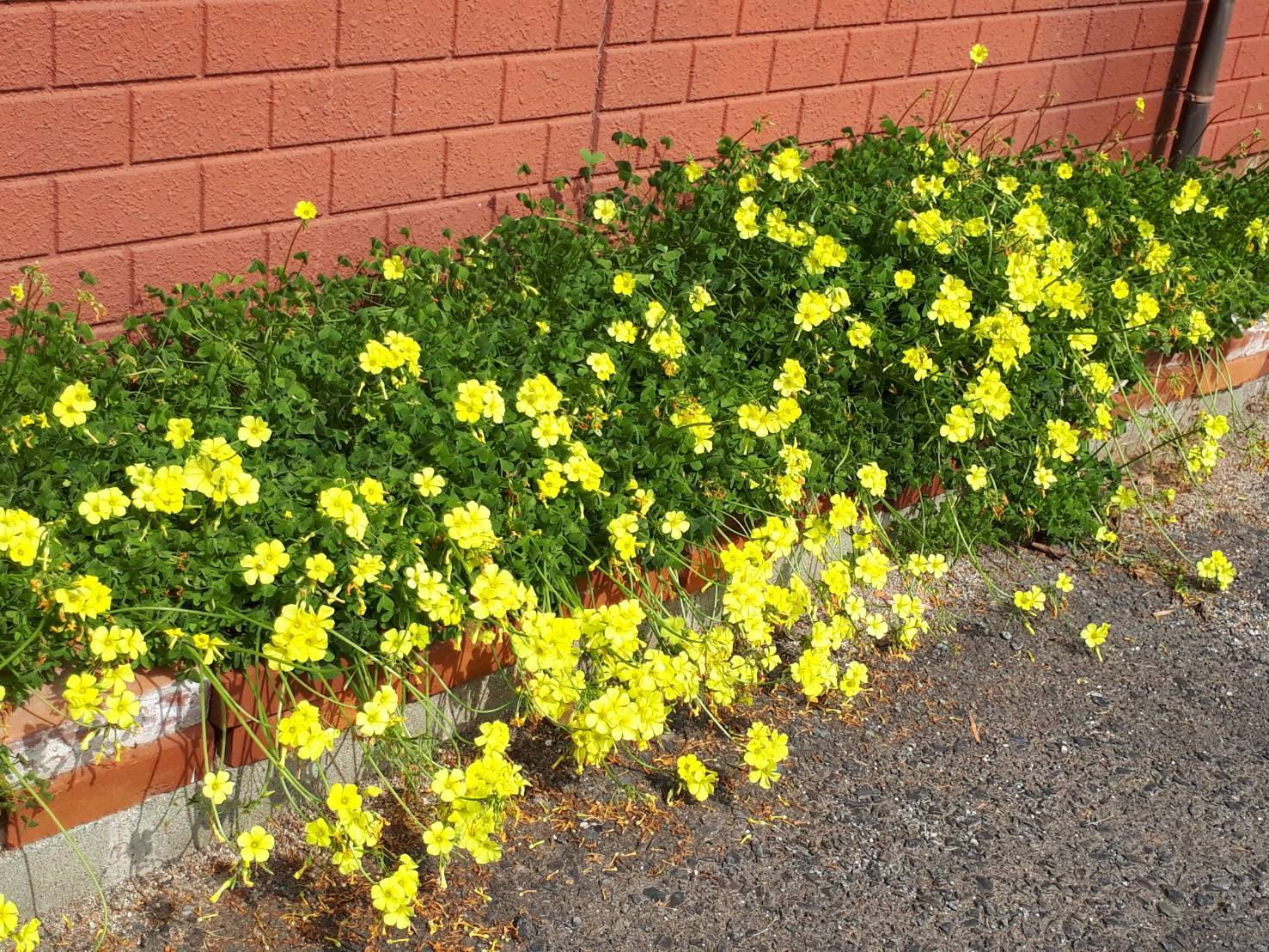 少しずつ 春が_e0245805_17041734.jpeg