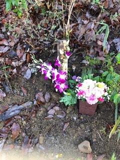 ミッキーのお墓参り。_d0171907_19434432.jpg