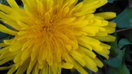 あわじ花の歳時記園にも春がきた~_c0280108_23111032.jpg