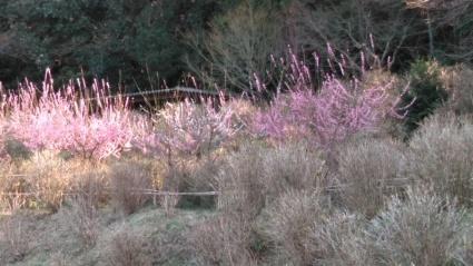 あわじ花の歳時記園にも春がきた~_c0280108_23121682.jpg