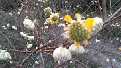 あわじ花の歳時記園にも春がきた~_c0280108_23141175.jpg