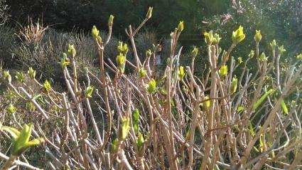 あわじ花の歳時記園にも春がきた~_c0280108_23152091.jpg