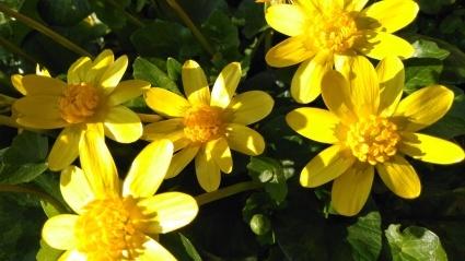 あわじ花の歳時記園にも春がきた~_c0280108_23160550.jpg