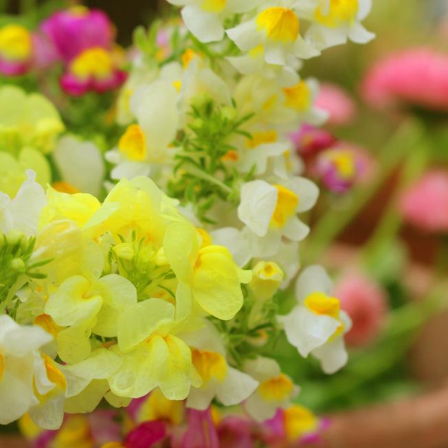 花植えてマインドを落ち着ける_a0329820_02252224.jpg