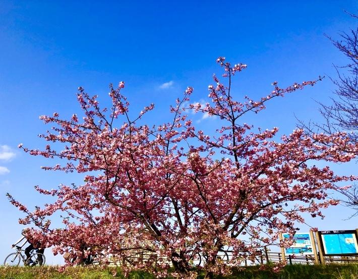 3月の出演スケジュール(3/28赤坂公演中止、3/29広尾公演追加)_a0103940_01174324.jpeg