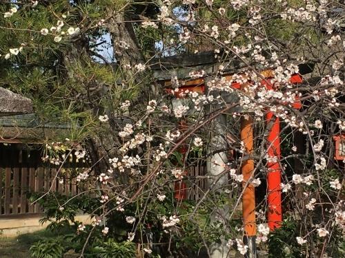 京都・奈良 冬の旅\'20 その2_e0326953_22450530.jpg