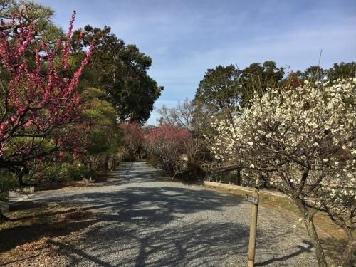 京都・奈良 冬の旅\'20 その2_e0326953_22482131.jpg