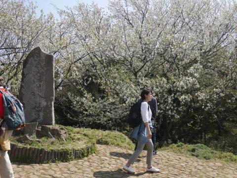 3・28北鎌倉ウォッチング! 六国見山でお花見会_c0014967_08494383.jpg