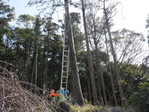3・1六国見山手入れ(上)スギの間伐、下刈り、台風の後始末_c0014967_18525453.jpg
