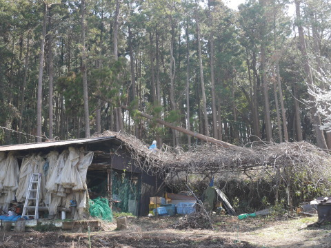 3・1六国見山手入れ(上)スギの間伐、下刈り、台風の後始末_c0014967_18550334.jpg