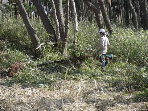 3・1六国見山手入れ(上)スギの間伐、下刈り、台風の後始末_c0014967_18573430.jpg