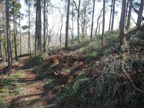 3・1六国見山手入れ(上)スギの間伐、下刈り、台風の後始末_c0014967_18591744.jpg