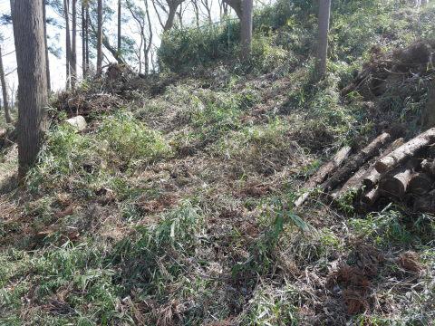 3・1六国見山手入れ(上)スギの間伐、下刈り、台風の後始末_c0014967_19005887.jpg