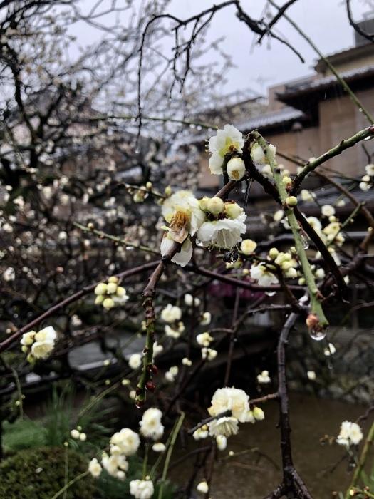 京都で2020年2月22日 猫の日に遭遇して_d0105967_01191789.jpeg