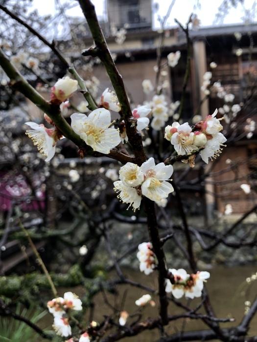 京都で2020年2月22日 猫の日に遭遇して_d0105967_01195892.jpeg
