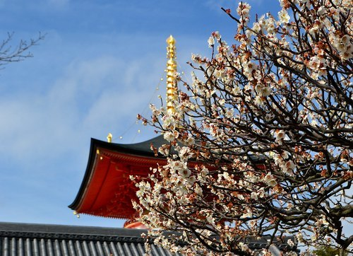 今年も中山寺の梅まつりへ_b0102572_11205687.jpg