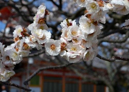 今年も中山寺の梅まつりへ_b0102572_11212179.jpg