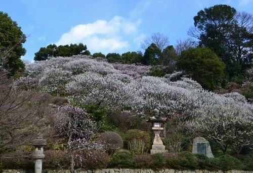 今年も中山寺の梅まつりへ_b0102572_11214688.jpg