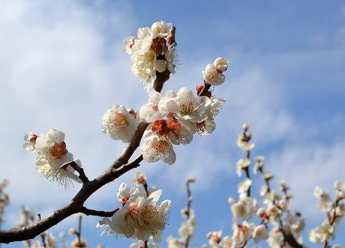 今年も中山寺の梅まつりへ_b0102572_11224753.jpg