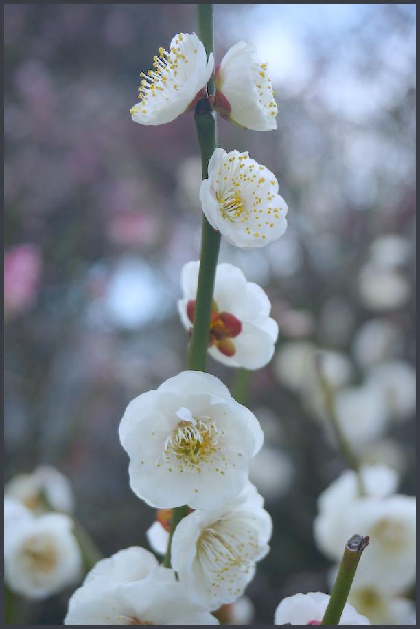 小村井 香取神社・香梅園_b0340572_16253422.jpg