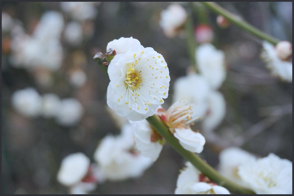 小村井 香取神社・香梅園_b0340572_16254629.jpg