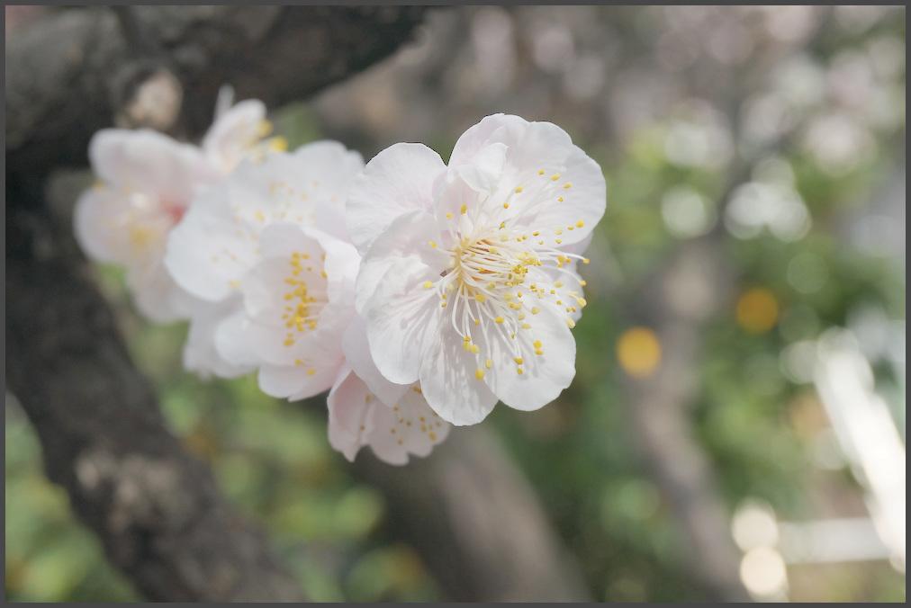 小村井 香取神社・香梅園_b0340572_16255109.jpg