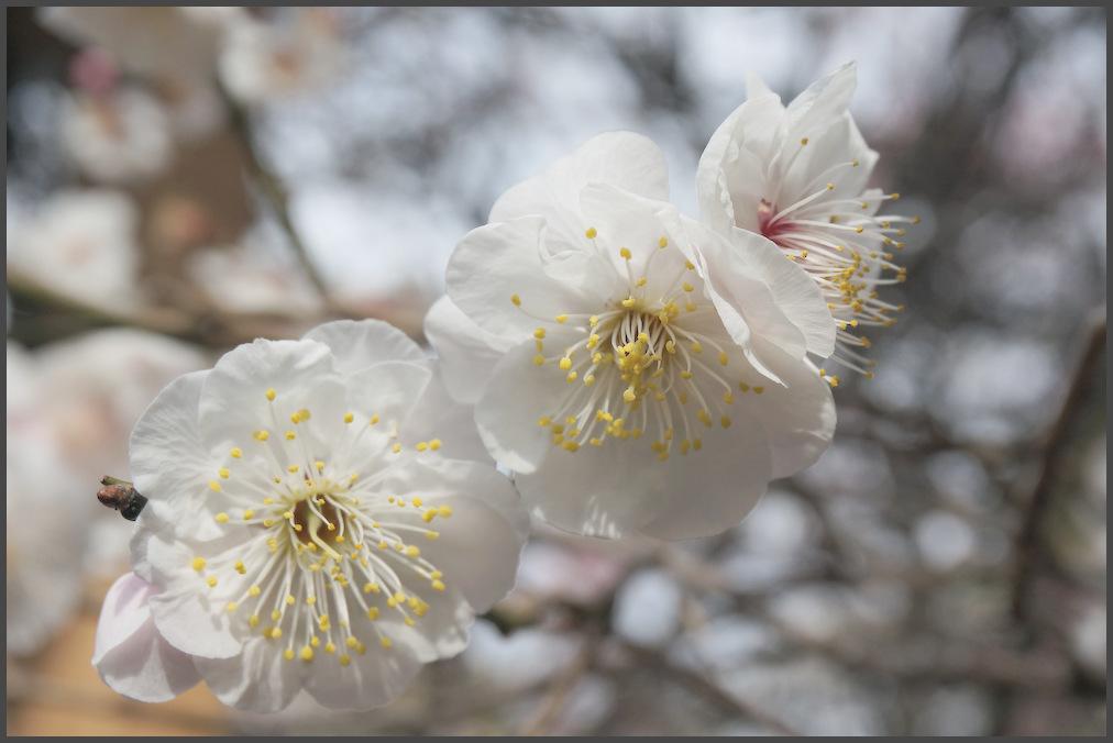 小村井 香取神社・香梅園_b0340572_16255587.jpg