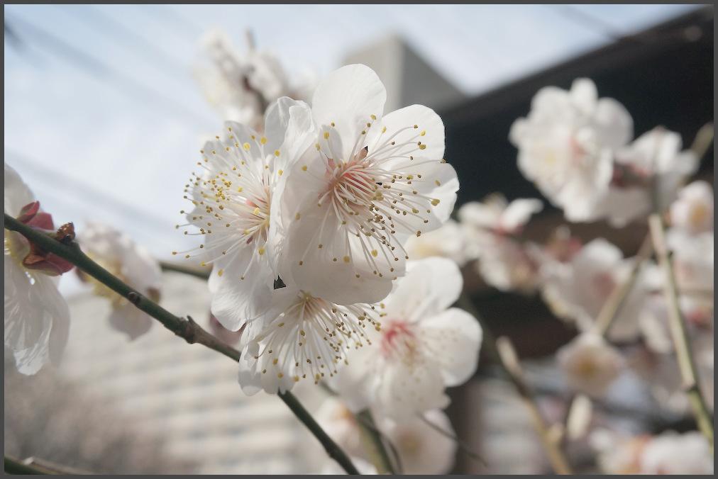 小村井 香取神社・香梅園_b0340572_16255979.jpg