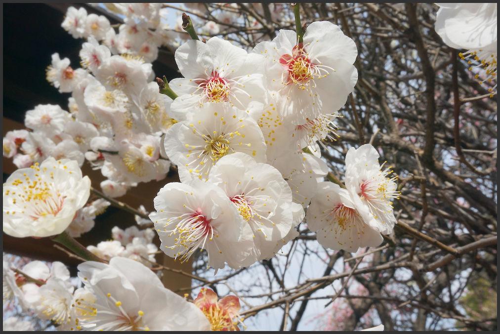 小村井 香取神社・香梅園_b0340572_16260313.jpg