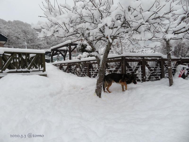 綿雪/cotton snow_f0067179_21364413.jpg