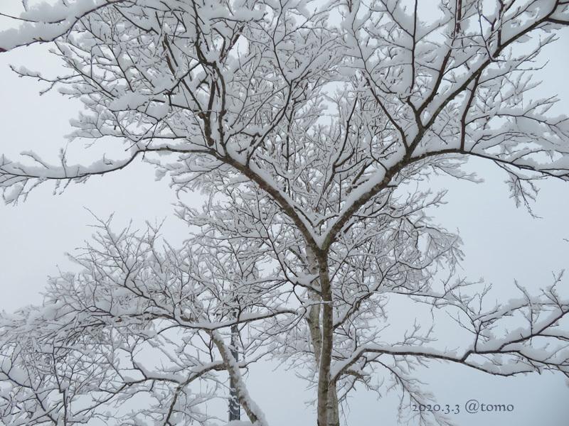 綿雪/cotton snow_f0067179_21365393.jpg