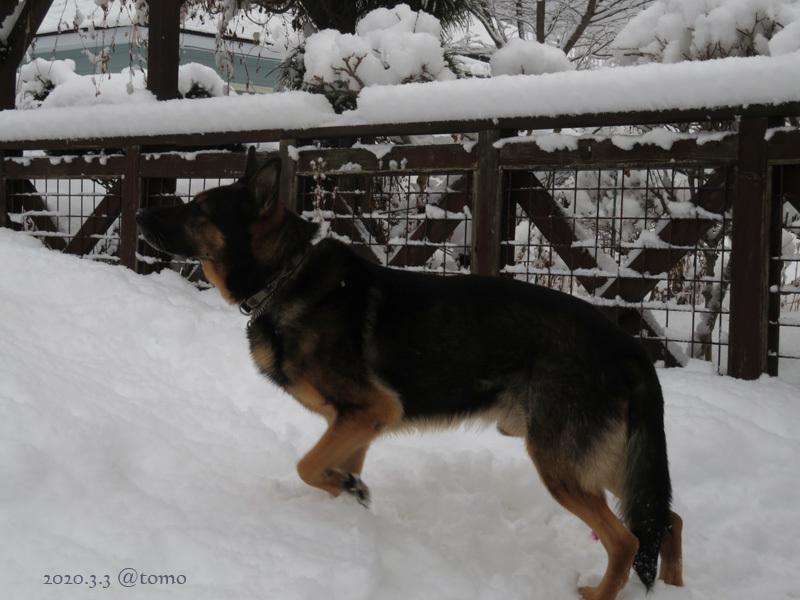 綿雪/cotton snow_f0067179_21371357.jpg