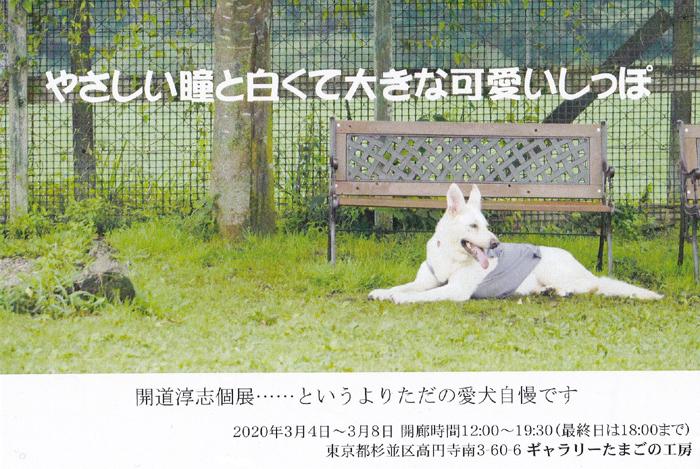 「やさしい瞳と白くて大きな可愛いしっぽ」開道 淳志 写真展_e0134502_07382483.jpg