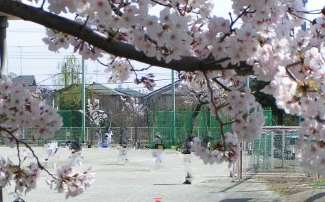 粛々と咲いた桜の花のように・・・_e0148909_09074703.jpg