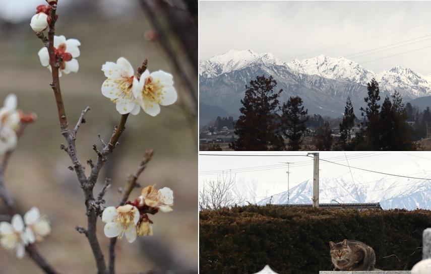梅の花_a0212730_18572871.jpg