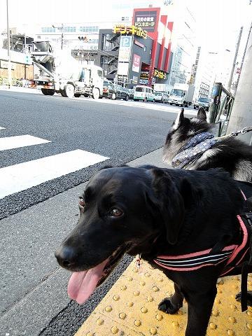 散歩屋日誌【36】_c0062832_14541661.jpg