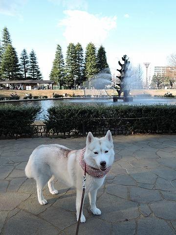 散歩屋日誌【36】_c0062832_14551104.jpg