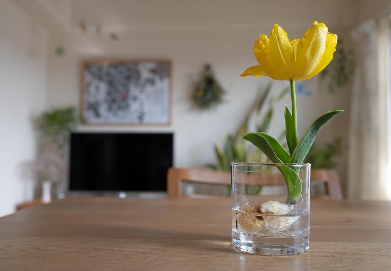 scene1643:グラスの中のチューリップ_e0253132_22275072.jpg