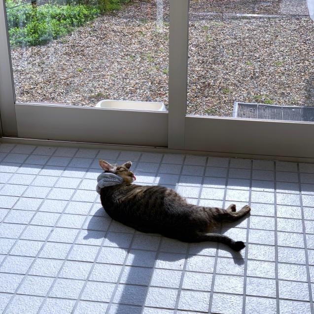 いやしの猫玄関_d0355333_14151509.jpg