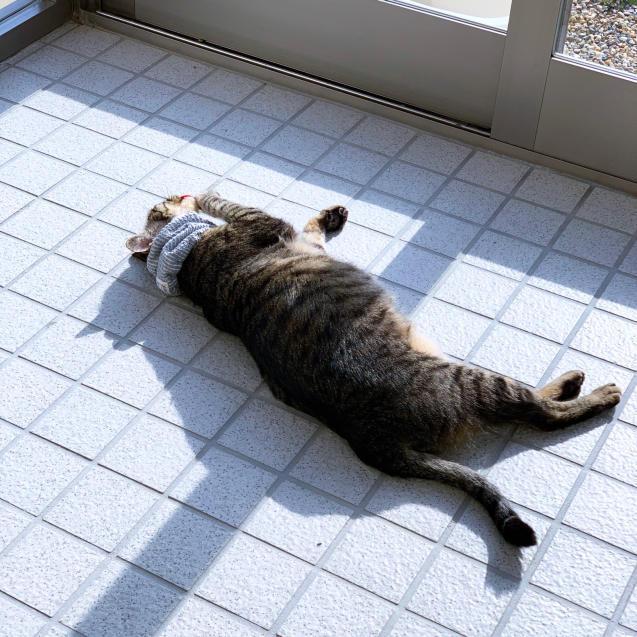 いやしの猫玄関_d0355333_14151720.jpg