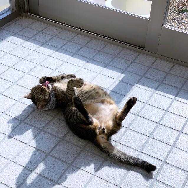 いやしの猫玄関_d0355333_14151921.jpg