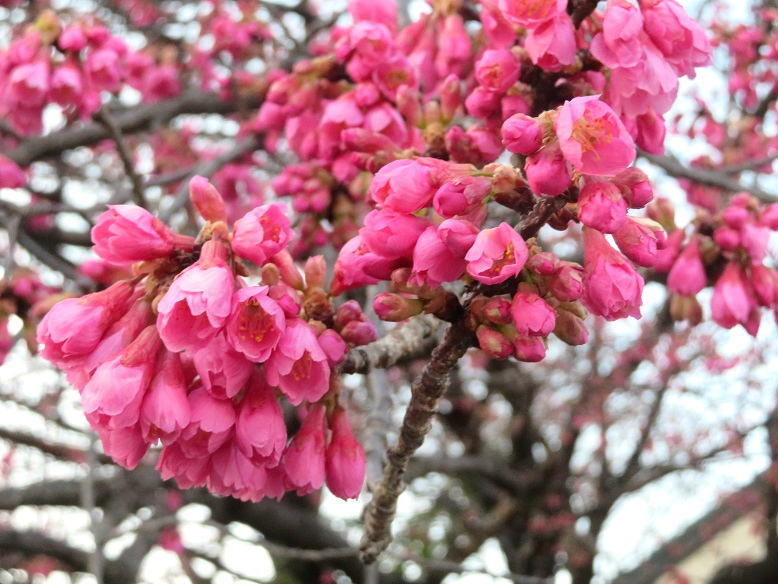 松坂屋富士での春の個展が閉会いたしました。_b0089338_23350103.jpg